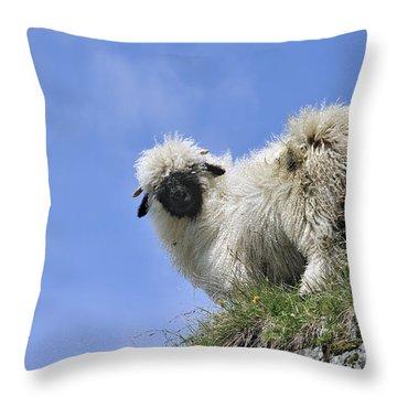 150827p302 Throw Pillow