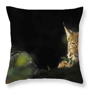 151001p105 Throw Pillow