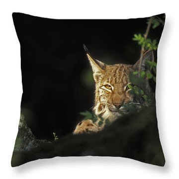 151001p105 Throw Pillow