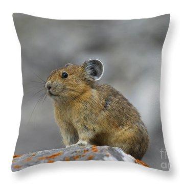 151221p238 Throw Pillow