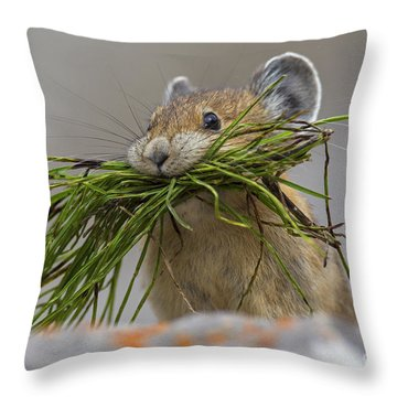 Pika With A Mouthful  Throw Pillow