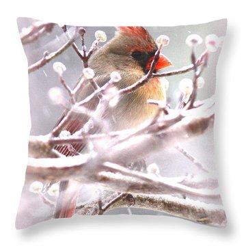 1554-003 Cardinal Throw Pillow by Travis Truelove