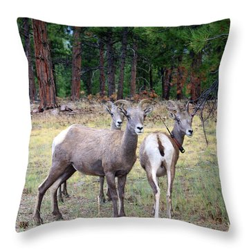 Flaming Gorge National Park Throw Pillow by Ellen Tully