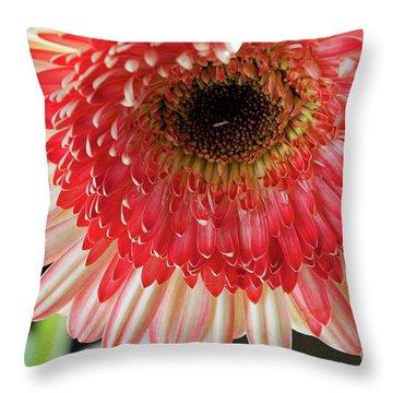 Nice Gerber Throw Pillow by Elvira Ladocki