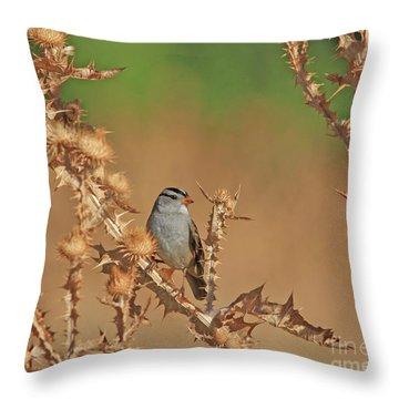White-crowned Sparrow Throw Pillow