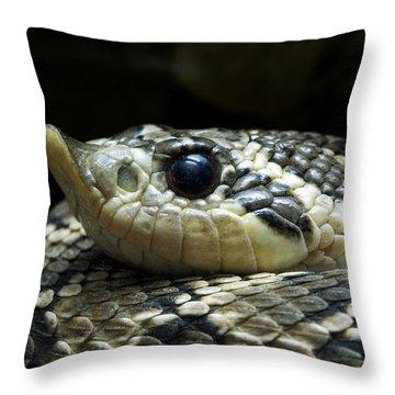 160115p141 Throw Pillow