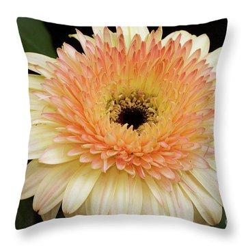 Beautiful Gerber Throw Pillow by Elvira Ladocki