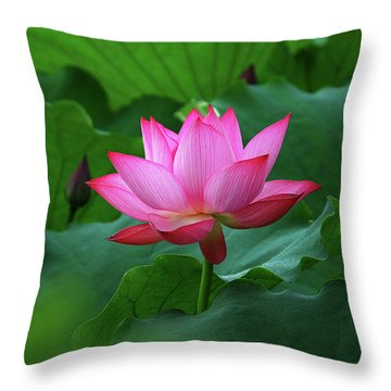 Throw Pillow featuring the photograph Blossoming Lotus Flower Closeup by Carl Ning