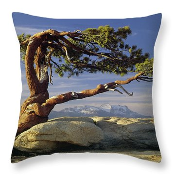 1m6701 Historic Jeffrey Pine Sentinel Dome Yosemite Throw Pillow
