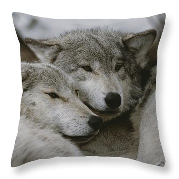 A Couple Of Gray Wolves, Canis Lupus Throw Pillow by Jim And Jamie Dutcher
