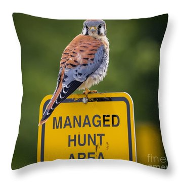 Throw Pillow featuring the photograph American Kestrel by Ricky L Jones