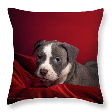 American Pitbull Puppy Throw Pillow