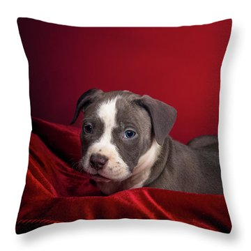 American Pitbull Puppy Throw Pillow
