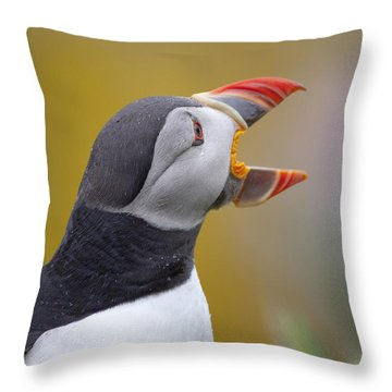 Atlantic Puffin - Scotland Throw Pillow