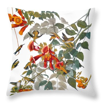 Audubon: Hummingbird Throw Pillow by Granger