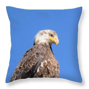 Bald Eagle Juvenile Perched Throw Pillow