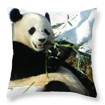 Bao Bao Sittin' In The Snow Taking A Bite Out Of Bamboo1 Throw Pillow
