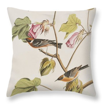 Bay Breasted Warbler Throw Pillow by John James Audubon