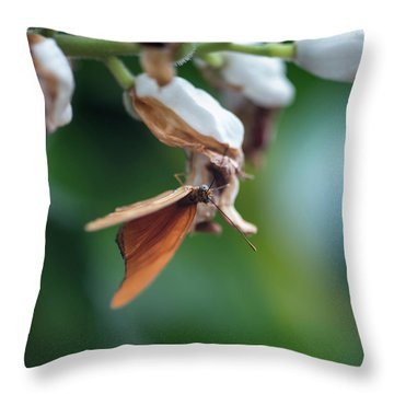 Beautiful Julia Butterfly Lepidoptra Nymphalidae Butterfly On Ye Throw Pillow