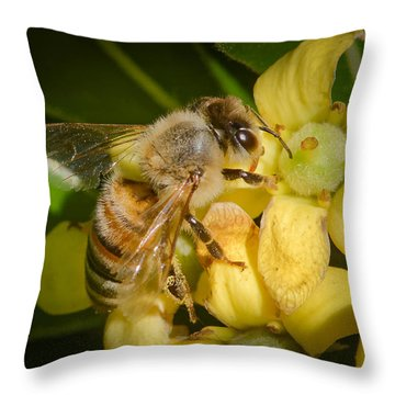 Throw Pillow featuring the photograph Bees Gathering From Pittosporum Flowers by Jim Thompson
