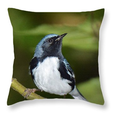 Black-throated Blue Throw Pillow by Alan Lenk