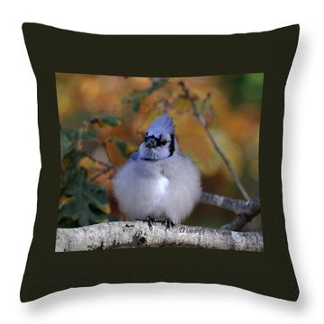 Blue Jay Throw Pillow by Diane Giurco