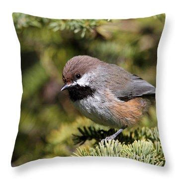 Boreal Chickadee Throw Pillow