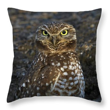 Burrowing Owl Throw Pillow by Doug Herr