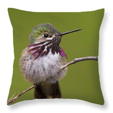 Calliope Hummingbird Throw Pillow by Doug Herr