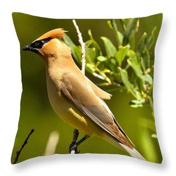 Cedar Waxwing Closeup Throw Pillow