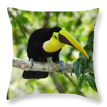 Chestnut-mandibled Toucan Throw Pillow