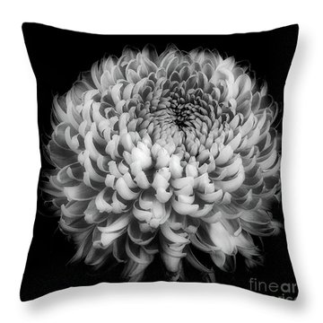 Throw Pillow featuring the photograph Chrysanthemum 'otome Pink' by Ann Jacobson