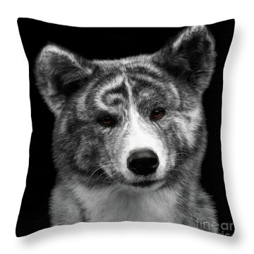 Closeup Portrait Of Akita Inu Dog On Isolated Black Background Throw Pillow