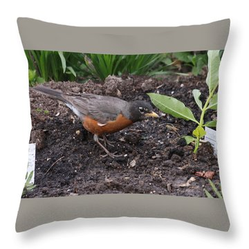Courtyard Robin Throw Pillow