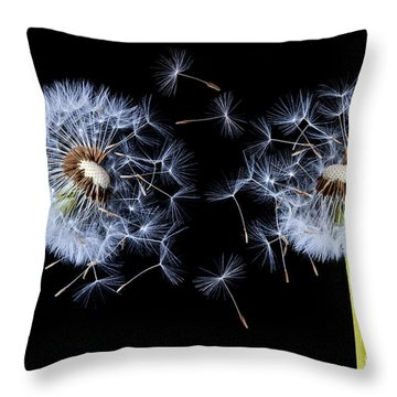 Throw Pillow featuring the photograph Dandelion On Black Background by Bess Hamiti