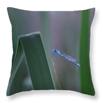 Dragonfly Throw Pillow by Nikki McInnes
