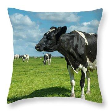 Dutch Cow Throw Pillow