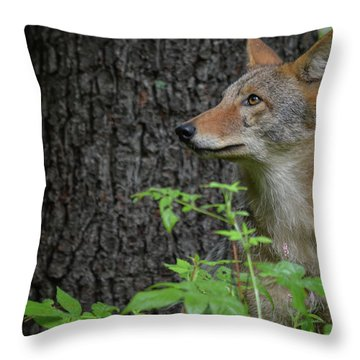 Early Morning Coyote In Maine Throw Pillow