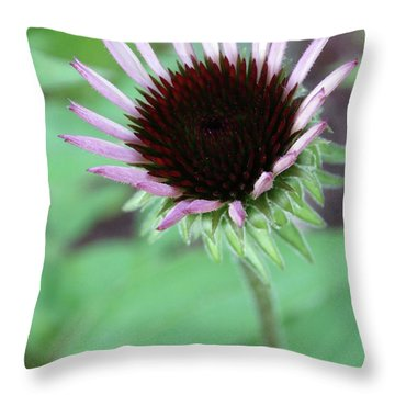 Emerging Coneflower Throw Pillow