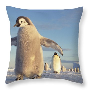 Emperor Penguin Aptenodytes Forsteri Throw Pillow by Tui De Roy
