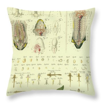 Throw Pillow featuring the drawing Fire Salamander Anatomy by Christian Leopold Mueller