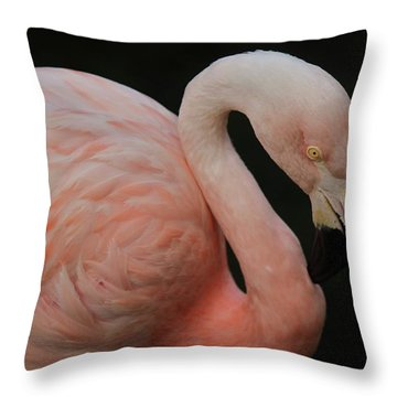 Flamingo Throw Pillow by Paulette Thomas
