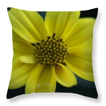 Throw Pillow featuring the photograph Flower by Heidi Poulin