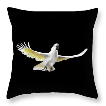 Flying Crested Cockatoo Alba, Umbrella, Indonesia, Isolated On Black Background Throw Pillow