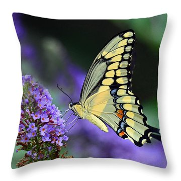 Throw Pillow featuring the photograph Giant Swallowtail by Rodney Campbell