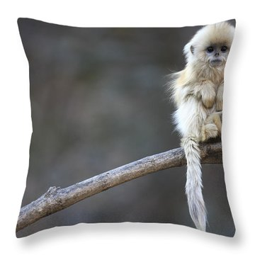 Throw Pillow featuring the photograph Golden Snub-nosed Monkey Rhinopithecus by Cyril Ruoso
