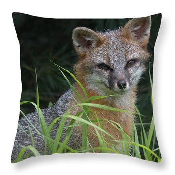 Gray Fox In The Grass Throw Pillow