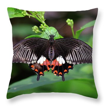 Great Mormon Butterfly Throw Pillow
