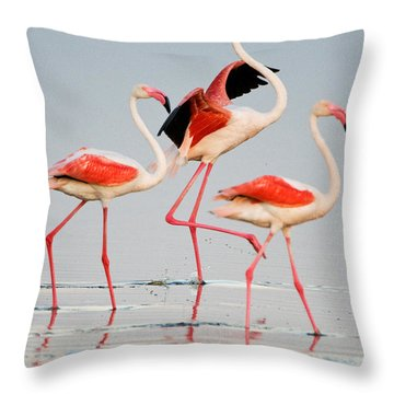 Greater Flamingos Phoenicopterus Roseus Throw Pillow