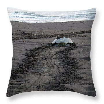 Throw Pillow featuring the photograph Green Sea Turtle Returning To Sea by Breck Bartholomew